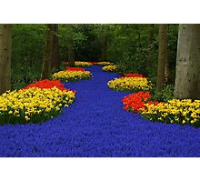 Flower path Photographic Print
