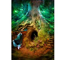 Down the Rabbit Hole Photographic Print