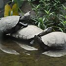 Turtle Love by T. Victor