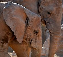 Elephants by INTERACTION