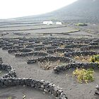 wine scape , lanzarote ,spain by annet goetheer