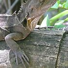 Southern Angle-Headed Dragon (hypsilurus spinipes) by Margaret  Hyde