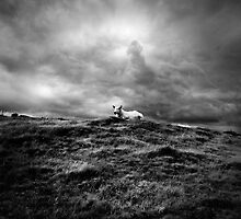 Sheep May Safely Graze by Nigel Bangert