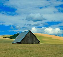 Barn in a Wheatfield by AdventureGuy