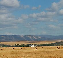 Walla Walla Wheatfield by AdventureGuy