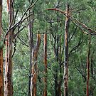 Gum Trees In The Rain by aussiebushstick