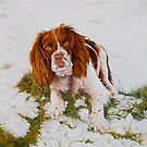 Muttley - The best Springer Spaniel by Pauline Sharp