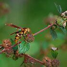 Yellow wasp gathering fibers 2 by Ben Waggoner