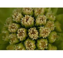 Natural mandala of little cream flowers Photographic Print