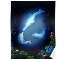 Dolphin Cove Poster