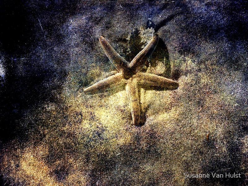 Sea Star by Susanne Van Hulst