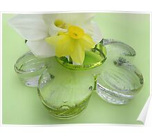 Daffodils, and Glass Daisy  Poster