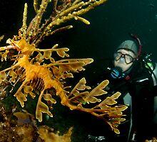 Leafy Seadragon and diver by Deb Aston