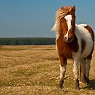 Cornish Pony by Rob Hawkins