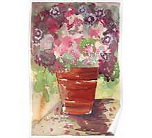 Dianthus in Terracotta Pot Poster