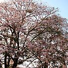 Blooming Tree by Akash Puthraya