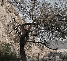 Tree Of Acropolis. by amimages