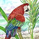 Seaside Parrot by mleboeuf