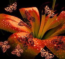 Butterflies  & Lily. by Vitta