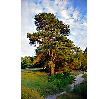 Lone Pine by the Lake Photographic Print
