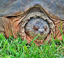 Big Turtle by James Brotherton