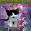 Black and white kitten in a wonder world by ♥⊱ B. Randi Bailey
