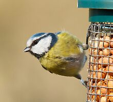 Blue tit 2 by Richard Bowler