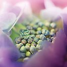Abstract Macro Flower by Cubagallery