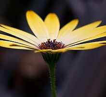 Yellow Flower by chemival