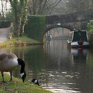 Quack Quack by twinnieE