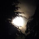 Supermoon V 19/3/11 between the trees by Photos - Pauline Wherrell