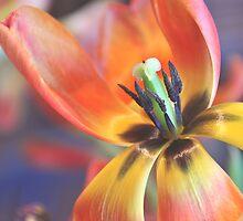 Inner beauty! by MarieG