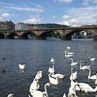 Prague - Manes bridge by Jean-Luc Rollier