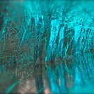 Psychedelic Art   -   Willows  Landscape   . Skawa River . Poland . by Brown Sugar. F*Favorites: 12 Views: 1870 . Woooows !!!!  Thank you friends ! by AndGoszcz