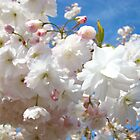 Elegant Pink Fluffy Sunlit Spring Tree Blossoms Flowers Baslee Troutman by BasleeArtPrints
