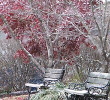 Dogwood Park-first snow 2010(2) by rratledge