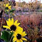 Bosque Flower by scottmarla