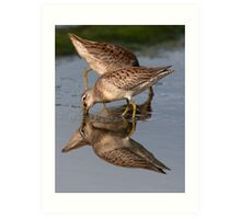 Dowitcher Reflections Art Print