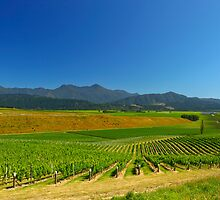 New Zealand Vineyard by 104paul