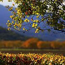 The Colors of Fall by gommie