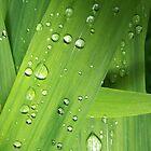 sprinkled greens by serpentwhisper