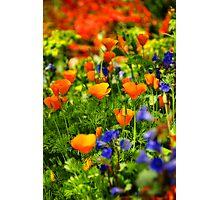 Arizona Wildflowers Photographic Print