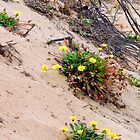 Flowers in the sand by MarthaBurns