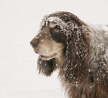 snow came too suddenly... by Nikolay Semyonov