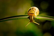 Snail doing gymnastics by lensbaby