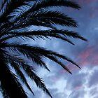 Palm Tree by Kelly Delaney