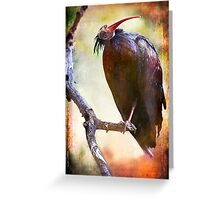 Northern Bald Ibis Portrait#2 Greeting Card