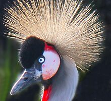 The Grey Crowned Crane in Rotterdam by John44