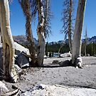 Inyo National Forest by Dawn Parker