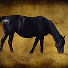 Black Beauty by pat gamwell